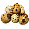 Egg - Quail - Whole - Fresh - Raw